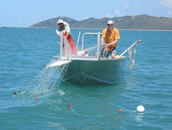 Fishing Nets Fish Meshes Of · Free photo on Pixabay