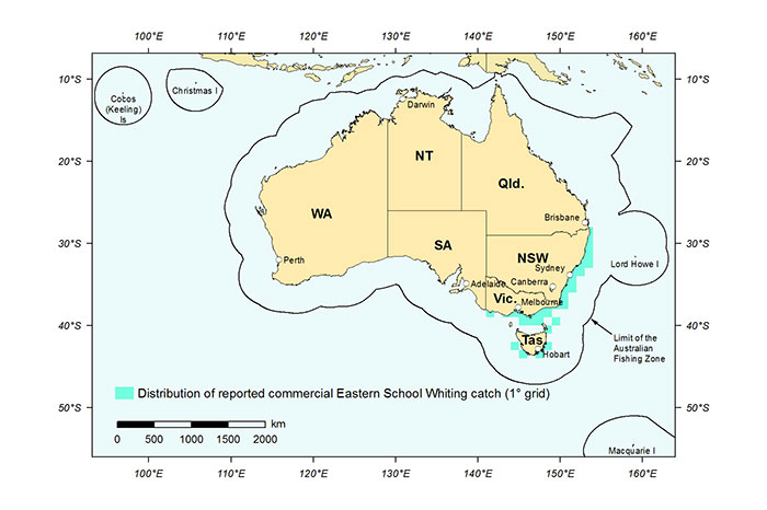Figure 1: Distribution of reported commercial catch of Eastern School Whiting in Australian waters, 2013 (calendar year)