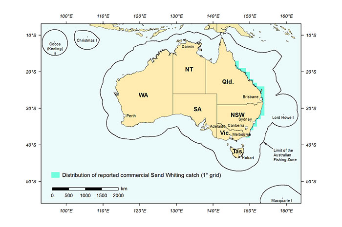 Figure 1: Distribution of reported commercial catch of Sand Whiting in Australian waters, 2013 (calendar year)